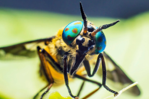 Insects. Photo / Thinkstock
