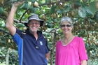 Wayne and Elaine Skiffington decided to invest all their efforts into kiwifruit about 12 years ago and have never looked back.