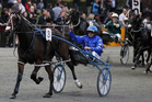 Smolda is shortened to be joint favourite for the A$750,000 inter Dominion Final. Photo / Christine Cornege