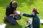 Wildlife vet Lisa Argilla and Massey University vet student Brandy Maloney tube-feed an underweight chick. Photo / Mel Young