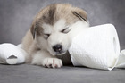 Not just a pretty face; puppies can act as a biomotive trigger to entice you to buy a product, says an award-winning brand consultant. Photo / Thinkstock