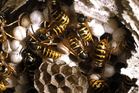 A swarm of wasps or bees attacked a woman and children on  Tahunanui Beach.. Photo / Thinkstock