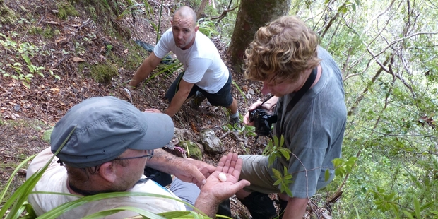 DoC scientist Graeme Taylor cradles the storm petrel egg, while Auckland University's Dr Matt Rayner, center, and Te Papa's Alan Tennyson look on.