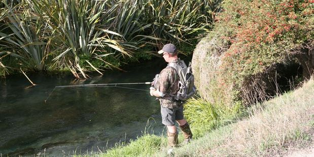 Dry flies can produce excellent results in small Waikato streams.