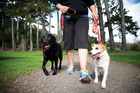 Dog walking in one of Aucklands' 4200 parks.