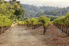 California's Sonoma region is famous for its many vineyards. Photo / Thinkstock