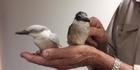 Meet the genetic freak with the beak