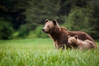 A mother and cub in the wild. Photo / 123RF