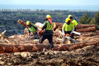 Tree planting and harvesting is a key factor in emissions. Photo / NZME.