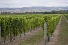 Make sure you visit some vineyards while you're in Marlborough - but don't stop there. The region's also home to some outstanding produce and magnificent seafood. Photo / Thinkstock