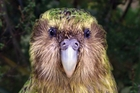 Improvements to captive breeding techniques that have seen the kakapo rescued from extinction is an example of a practical solution, but they cost.
