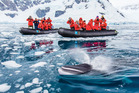 Tourists on the National Geographic Explorer ship watch a curious minke whale in Paradise Bay. Photo / Supplied