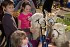 Kids interact with some animals at Fieldays. Photo / Stephen Barker