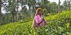With a bit of help, the writer got to see the tea plantations of Sri Lanka despite injuring her leg on holiday. Photo / Alex Robertson
