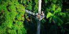 The Rainforest Skywalk at Mt Tamborine on the Gold Coast. Photo / Supplied