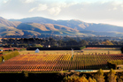Martinborough is home to over 20 largely family-owned wineries. Photo / Supplied