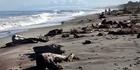 The wild Hokitika beach. Photo / Supplied