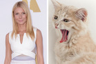 Gwyneth Paltrow, left, and a cat with excellent yawning technique, right. Photos / AP, Thinkstock