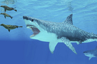Megalodon: The Monster Shark Lives was about a real, but extinct, 60-foot predator. Photo / Thinkstock