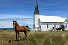 Horses rest in a field at the Raukokore church on the East Cape, near Te Kaha. Photo / Alan Gibson