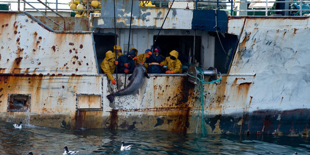 The crew of a vessel, alleged to be operating illegally, haul in their catch. Photo / Supplied