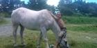 Snow O'Halloran mounts horse blue