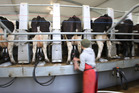 Dairy prices fell 2.9 per cent at the latest GlobalDairyTrade auction.Photo / Sarah Ivey
