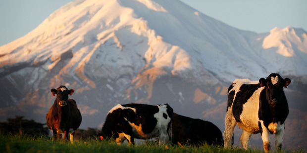 John Luxton says the New Zealand dairy industry is the only dairy sector in the TPP which is predominantly export focussed. Photo / Christine Cornege.