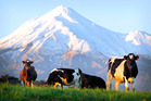 Fonterra is confined to segments of business that deliver a return on assets of no more than 5-8%, making it a 'bottom-feeder'. Photo / Christine Cornege
