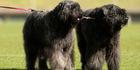 Rotorua Kennel Association (RKA) All Breeds Dog Show