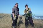 WEEDING: Sara Treadgold (left), DOC worker, and Lyneke Onderwater, a volunteer, remove introduced pink ragwort. PHOTO/LAUREL STOWELL 310815WCLAU02