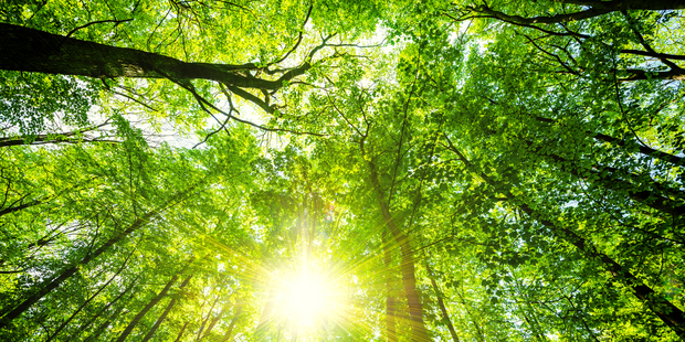 Humans are responsible for having wiped out nearly half of the trees on earth, according to new research. Photo / iStock
