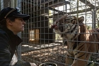 Sam Kudeweh with a male Sumatran tiger at Auckland Zoo, where she worked for eight years. Photo / Doug Sherring