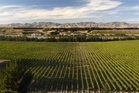 You're surrounded by vines in Marlborough. Photo / Supplied