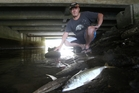 Shaun Hardy was shocked to find more than 100 dead mackerel in the Kopurererua Stream.Photo / John Borren