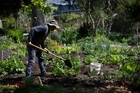 Community garden digging in for future
