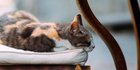 Cat cafe opening in Auckland