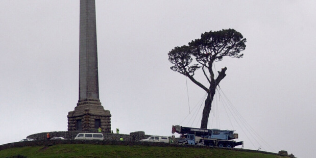 The 125-year-old Monterey pine was removed from Auckland's One Tree Hill in 2000 after chainsaw attacks.