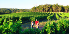 A vineyard near Yallingup, Margaret River. Photo / Tourism Western Australia