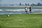 Mike Reid and Sarah Ries walk by a pile of dried sea lettuce. Photo / George Novak