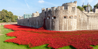 Ceramic poppies on display at the Tower of London. Photo / iStock