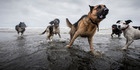 Dogs get physical in cross-country adventure