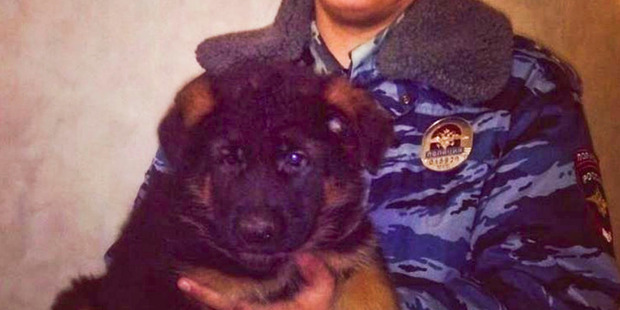 A puppy called Dobrynia has been offered by Russia to France to replace the police dog killed by a suicide bomber in Paris. Photo / Instagram