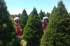 TREE TIME: Stacey and Tarryn Jones in the great landscape of tiny pines at Santa's Trees in Meeanee.PHOTO/ROGER MORONEY