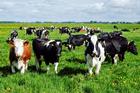 China to make test tube beef