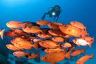 Swim among vividly-coloured fish in Palau. Photo / Thinkstock