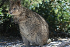 Western Australia: Riot of colour in land of quokka