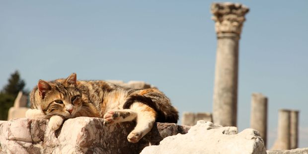 A cat resting in Ephesus. Photo / Supplied