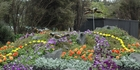 Christchurch has pulled the plug on staging the Ellerslie Flower Show but a similar event is being planned for Auckland's Bastion Point. Photo / Christchurch Star