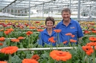 Harald and Connie Esendam from Plenty Flora Gerberas.